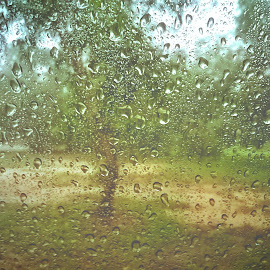 Rainy Day by Aravindh Raj - Instagram & Mobile Android ( greeny, nature, chill, rain )