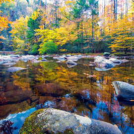 Fall Colors  by Carol Ward - Landscapes Waterscapes ( tn, autumn leaves, great smoky mountains national park, reflections, trees, leaves, rocks, smoky mountains )