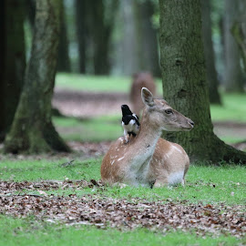 Deer and Birdie by Per Holt Oksen-Larsen - Novices Only Wildlife ( discuss, birdie, weather, the, and, deer )