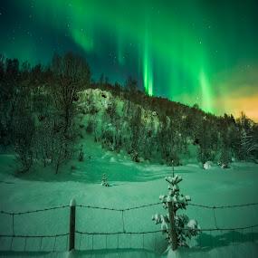 by Jens Andre Mehammer Birkeland - Instagram & Mobile Other ( instagram, winter, tree )