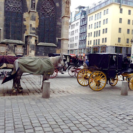 Horse and Cart in Vienna by Lil's Photography - City,  Street & Park  Street Scenes (  )