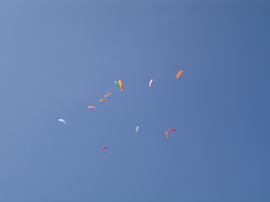 Paragliding gaggle by Chris Bradley - Sports & Fitness Other Sports