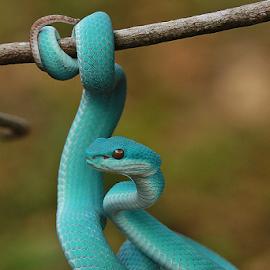 by Hernawan Safari - Animals Reptiles