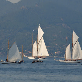 Full Rigg by Victor Eliu - Sports & Fitness Watersports ( cannes, sailing, sports, france, vintage yachts, regatta, waretsports )