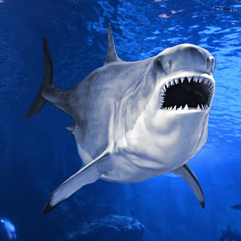 Dangerous Waters  by Bob Welch - Animals Fish ( open, mouth, shark, teeth )