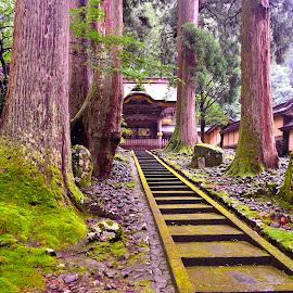 The ZEN's path to Eiheiji by Miki Constantine - Buildings & Architecture Public & Historical