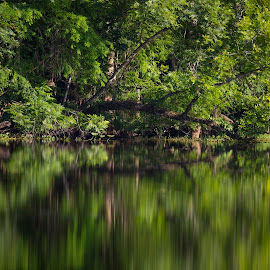 Green Reflections by Lynn Kohut - Landscapes Waterscapes ( water, florida, reflections, summertime, silver river, river,  )