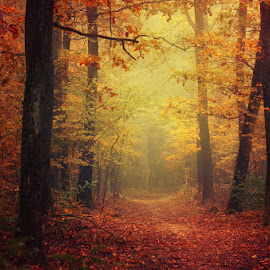 Autumn Walk XLII. by Zsolt Zsigmond - Landscapes Forests ( autumn, fog, foliage, fall, trees, forest, woods, colours, mist )