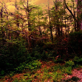 Freetown by Robert Lopes - Landscapes Forests