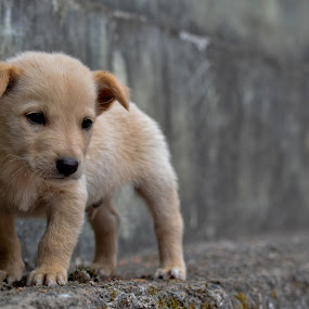 Dog on the wall by Aravindh Ganesh - Animals - Dogs Portraits ( dogs, pets, puppy, baby, young, animal )