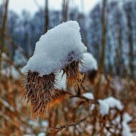 Sněhová čepice by Vláďa Lipina - Nature Up Close Other plants