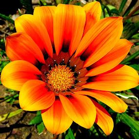 (((Smile))) on a sunny day. by Lanie Badenhorst - Uncategorized All Uncategorized (  )