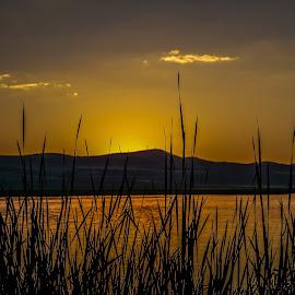 sunset by Alice Burghart - Landscapes Sunsets & Sunrises