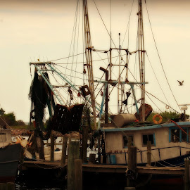 On the Bayou by A.j. Amos - Transportation Boats ( water, life, scenery, fisherman, boat )