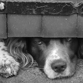 All alone by Alex Nicholson - Animals - Dogs Portraits