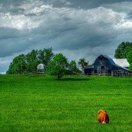 by Karen McKenzie McAdoo - Landscapes Prairies, Meadows & Fields