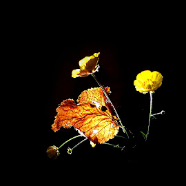 *** by Jurijs Ratanins - Instagram & Mobile Android ( mobilography, leave, nature, autumn, plants, yellow, flowers )