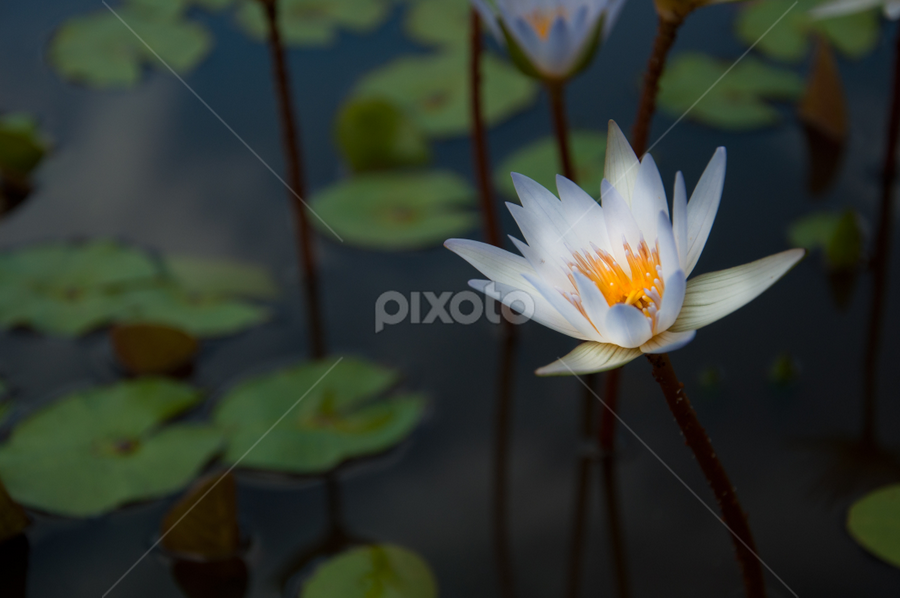 NEW BEGINNING by Alexis Lim Partosa - Nature Up Close Flowers - 2011-2013