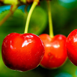 Summer by Radu Eftimie - Nature Up Close Gardens & Produce ( macro, cherries )