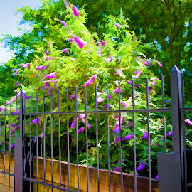 Butterfly Plant over Fence by Will McNamee - Digital Art Things ( gigart@aol.com, aundiram@msn.com, danielmcnamee@comcast.net, mcnamee2169@yahoo.com, ronmead179@comcast.net )