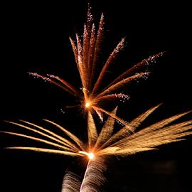 Firework of Art by Tierra McShane - Public Holidays July 4th ( firework, celebration, festive, fourth of july, summer )