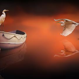 THE BOAT by Nasser Osman - Digital Art Animals ( reflection, fine art, nasser osman, boat, egret )