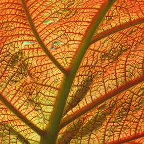 Macro Leaf by Karen Noble - Nature Up Close Leaves & Grasses (  )