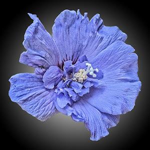 CPI flower 10.jpg