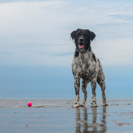 Puuntje by Natasja and Martijn - Animals - Dogs Playing ( puuntje, beach, playing, dog, sea )