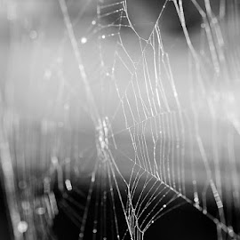 Web of Silk by Michelle Shutt - Nature Up Close Webs ( creepy, silk, home, black and white, macro photography, beautiful, web, insect, close up, macro shot, spider web, habitat, nature, dark, nature up close, spider,  )