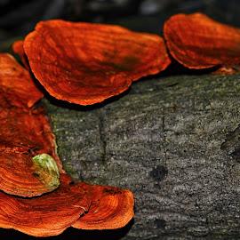 The Mushrooms by Attenk Holic - Nature Up Close Mushrooms & Fungi