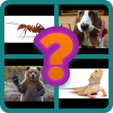 4 Pics 1 Animal - Alphabetical
