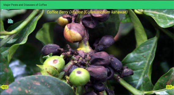 Pests and Diseases of Coffee - screenshot