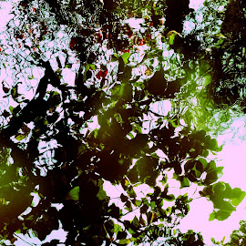 REFLECTION by Bharat Ramaswamy - Abstract Patterns ( water, reflection, green, reflections, leaf )