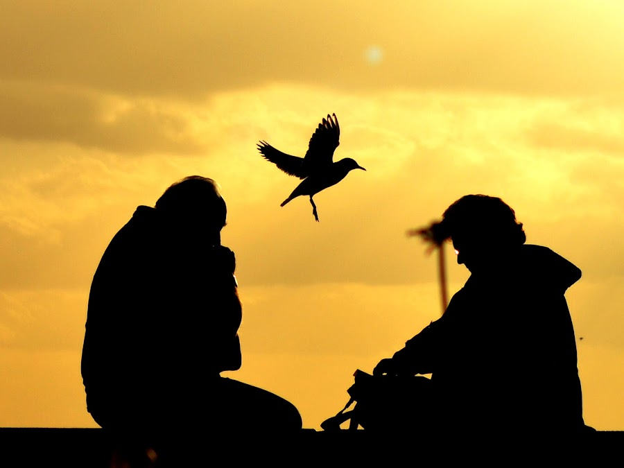 Old Age Flies - Sunset Silhouette by Anindya Sankar Dey - People Fine Art