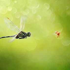 Chasing by Shikhei Goh III - Animals Insects & Spiders ( macro )
