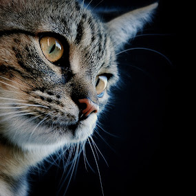 by Almasa Dalan - Animals - Cats Portraits