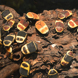 bugs by Michele Kelley - Novices Only Wildlife ( bugs, brown, yellow, small, black )