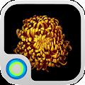 App Gold Flower Launcher Theme version 2015 APK