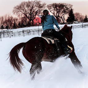 Riding Through the Snow by Emily Schmidt - Sports & Fitness Other Sports ( horseback riding, barn, horse, snow, country, animal snow  )