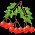 Free Download Лекарственные растения APK for Samsung