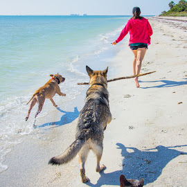 race time! by Meaghan Browning - Animals - Dogs Playing ( two, dogs, female, racing, beach, running )