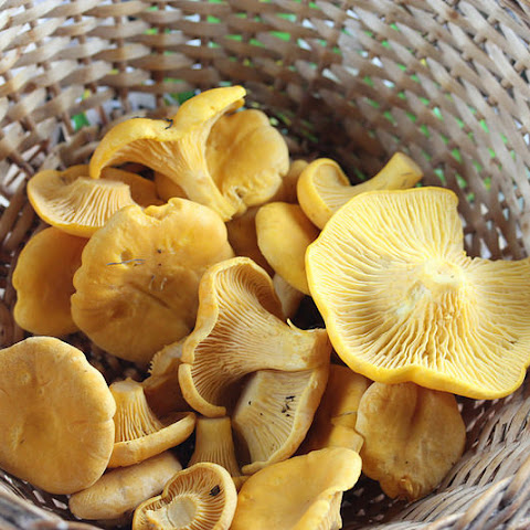 Fresh Chanterelle Mushrooms with Shallots
