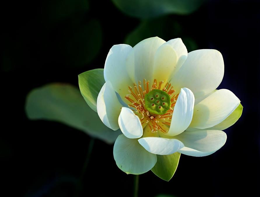 by William Wu - Flowers Flower Gardens