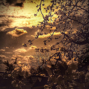 Calm Yellow Evening by Nat Bolfan-Stosic - Uncategorized All Uncategorized ( clouds, calm, sky, village, evening )