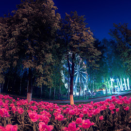 Tulip night by Nikita Terenin - City,  Street & Park  Night
