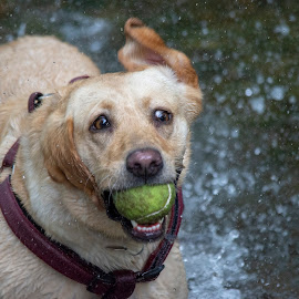 Water-lotta-fun!!!!!  by Fiona Etkin - Animals - Dogs Playing ( ball, nature, action, playing, floppy ears, dog, water, movement,  )