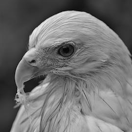 by Sigit Purnomo - Black & White Animals
