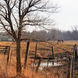 Prairie Farm by T Sco - Landscapes Prairies, Meadows & Fields ( farm, field, fence, nature, grass, creek, horse, landscape, prairie, animal )