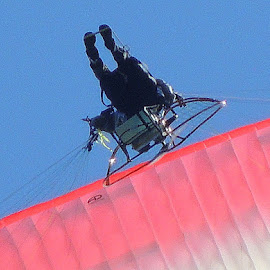 Parasailor In Action by Becky Luschei - Sports & Fitness Other Sports ( parasailor, ground, glides, equipment, closer )